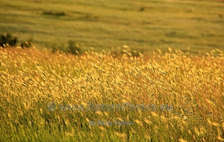 WildLife Photos of Landscapes, Grasslands, Hay Grasslands,