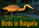 Birds of Bulgaria