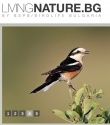 LivingNature/by BSPB Birdlife Bulgaria - Birdwatching, Natural history, Wildlife photography