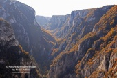 WildLife Photos of Canyon and gorges,