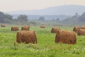 WildLife Photos of Farmland,